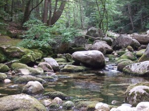 a quiet spot in a rock-strewn river